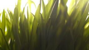 Natura che si sveglia dall'ibernazione, prima luce solare calda, fertilità dell'erba della molla immagini stock