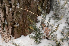 Natura congelata Immagini Stock Libere da Diritti