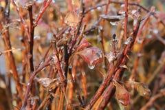 Natura congelata, Mosca, 2015 Fotografia Stock