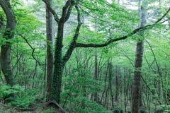 Natura Crimea Piękny tropikalny las w pogórzach Petri nie daleko od Yalta, Fotografia Stock