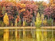 Natura cudy Fotografia Royalty Free