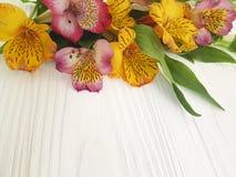 Natura decorata, bloomingon del fiore di Alstroemeria un fondo di legno bianco Fotografie Stock
