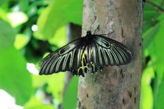 Natura dei giardini degli insetti degli alberi della farfalla Immagine Stock