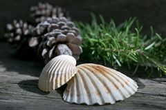 Natura dekoracyjni elementy na drewnianym tle zdjęcie royalty free