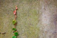 Natura del cemento della parete Fotografie Stock