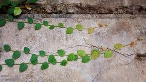 Natura del cemento della parete Immagini Stock Libere da Diritti