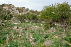 Natura del Cipro fotografia stock