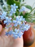 Natura del fiore fotografie stock