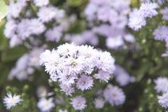 Natura del fiore con lo spazio della copia Fotografia Stock