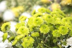 Natura del fiore con lo spazio della copia Immagine Stock