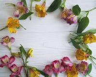 Natura del fiore di Alstroemeria, bloomingon un fondo di legno bianco Fotografia Stock Libera da Diritti