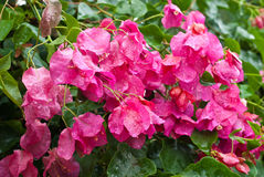 Natura del fiore dopo pioggia Fotografia Stock Libera da Diritti
