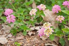 Natura del fiore e della pianta Fotografie Stock Libere da Diritti