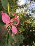 Natura del fiore fotografia stock libera da diritti
