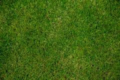 Natura del fondo dell'erba verde da sopra Fotografia Stock Libera da Diritti