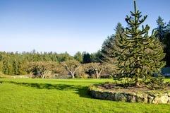 Natura del giardino della Victoria Fotografia Stock