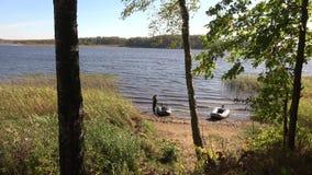 Natura del lago Tiosto stock footage