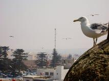 Natura del landsccape della città di essaouira del Marocco fotografia stock libera da diritti