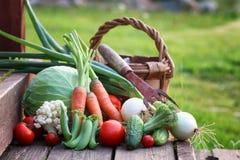 Natura del raccolto della verdura fresca all'aperto Fotografie Stock