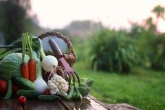 Natura del raccolto della verdura fresca all'aperto Immagine Stock