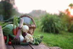 Natura del raccolto della verdura fresca all'aperto Immagine Stock Libera da Diritti