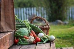 Natura del raccolto della verdura fresca all'aperto Immagini Stock Libere da Diritti
