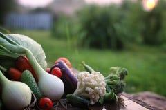 Natura del raccolto della verdura fresca all'aperto Fotografia Stock
