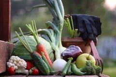 Natura del raccolto della verdura fresca all'aperto Fotografia Stock Libera da Diritti