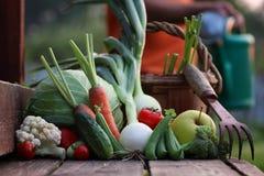 Natura del raccolto della verdura fresca all'aperto Immagini Stock