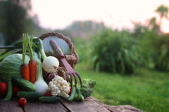 Natura del raccolto della verdura fresca all'aperto Fotografie Stock Libere da Diritti