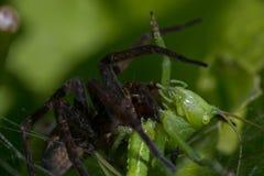 Natura del ragno immagini stock