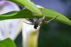 Natura del ragno immagine stock