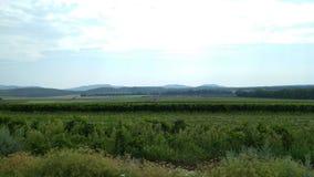 Natura del sud di Moravian fotografia stock libera da diritti