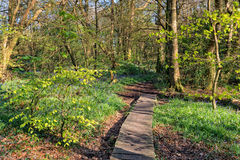 Natura del terreno boscoso fotografie stock