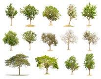 Natura dell'albero dell'isolato di Fotografia Stock Libera da Diritti
