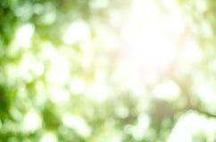 Natura dell'albero di verde del bokeh della sfuocatura Fotografia Stock Libera da Diritti