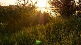 Natura dell'erba di alba di tramonto archivi video