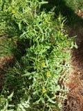 Natura dell'erba verde Immagini Stock Libere da Diritti