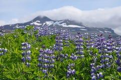 Natura dell'Islanda Fotografie Stock Libere da Diritti