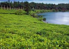 Natura dell'Isola Maurizio Lago ed alberi tropicali Fotografia Stock