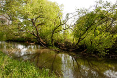 Natura dell'Ucraina fotografia stock