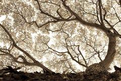 Natura della BG Fotografia Stock