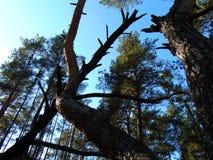 Natura della foresta immagini stock