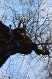 Natura della foresta Fotografie Stock