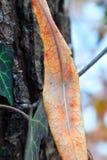 Natura della foresta Fotografia Stock