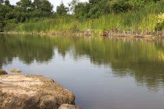 Natura della foresta dell'erba dell'acqua della pietra della roccia del fiume Immagini Stock
