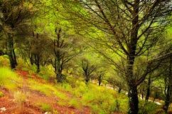 Natura della foresta della Spagna Immagini Stock