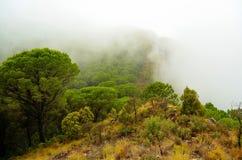 Natura della foresta della Spagna Fotografia Stock Libera da Diritti