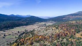 Natura della foresta di caduta Fotografie Stock Libere da Diritti