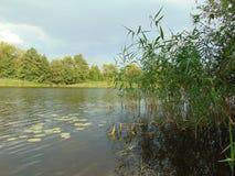Natura della foresta della superficie dell'acqua nessun uomo immagine stock
